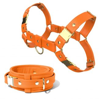 Bulldog Harness + Collar – Standard Leather – Orange - Gold Metal Fittings